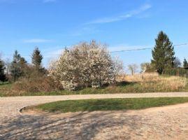Schwasdorf Grundstücke, Schwasdorf Grundstück kaufen